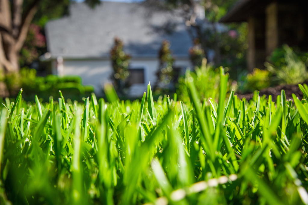 Lawn Service Dallas fall landscaping tips