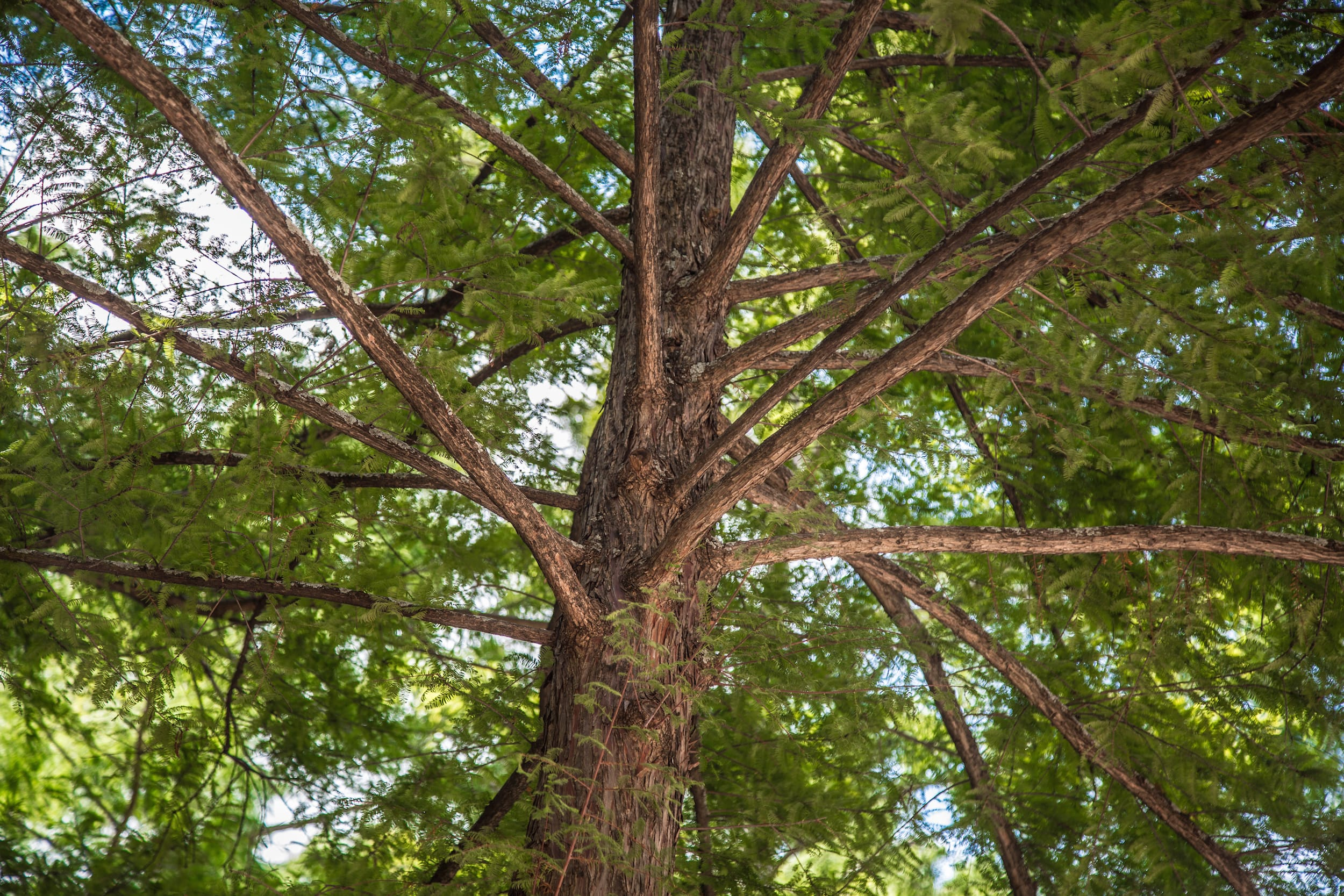 Tree Removal Dallas facts about trees