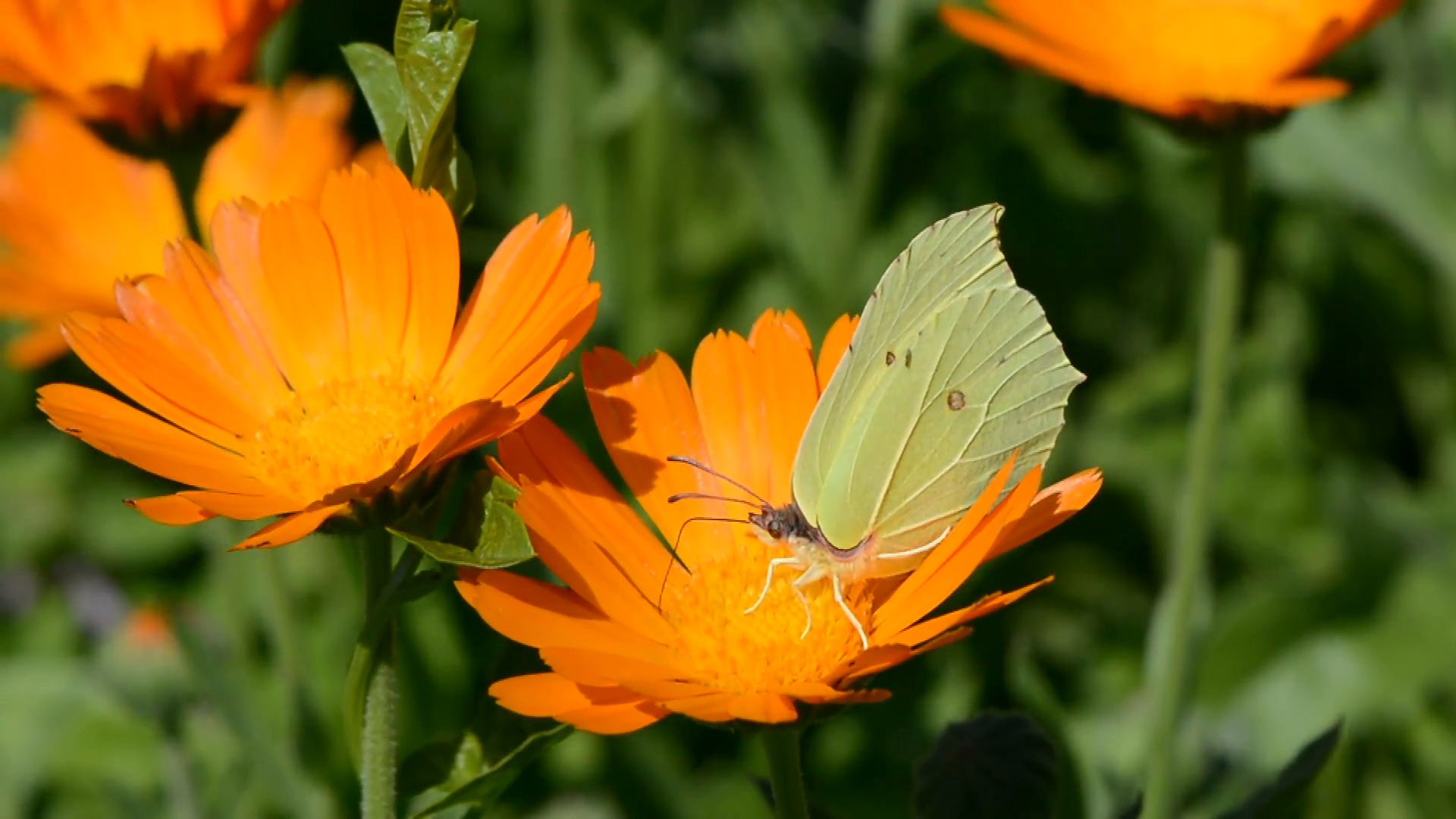 How to Attract Powerful Pollinators This Spring6